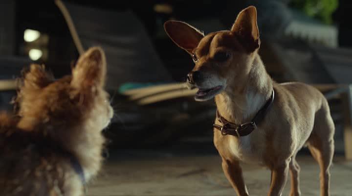 Крошка из Беверли-Хиллз 3 - Beverly Hills Chihuahua 3: Viva La Fiesta!