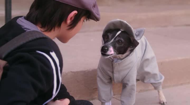 Пес-вампир - Vampire Dog