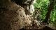 Драконовые осы - Dragon Wasps