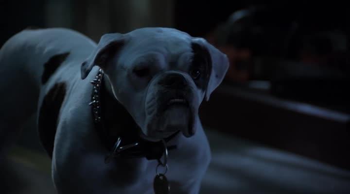 ����� ����� 2: ����� ������� - Santa Paws 2: The Santa Pups