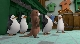 �������� �����������: �������� ������ - (Penguins Of Madagascar: Operation Vacation)