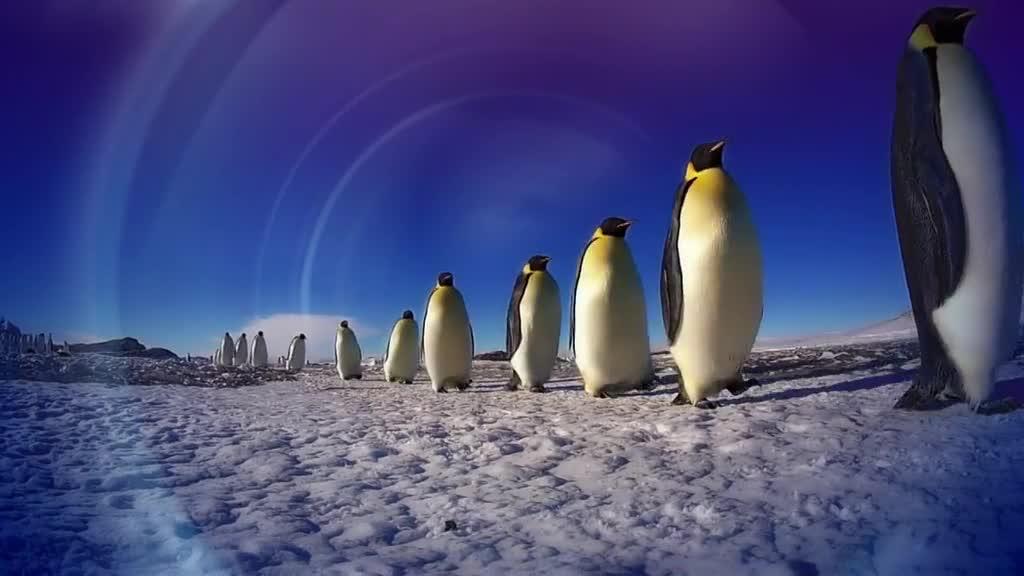 ������� � ����� ��� ���������� - Penguins — Spy In The Huddle