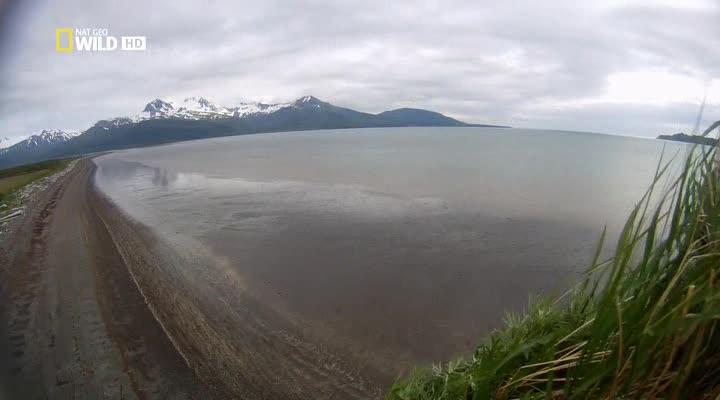 ����� ������� ������ - Wild Alaska