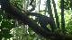 ����� ������� �����. ������������ ����������� ���: ����� ������� - Fascination Rainforest