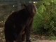����� ��������: ������� ������ - The Jungle Book- Mowgli's Story