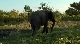 ����� ����� ������: ������� ������� - Wildlife South Africa- Big Five
