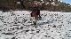 Погоня за ледниками - Chasing Ice