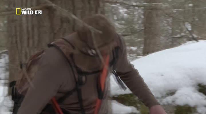 Nat Geo Wild: Пума против волка - Nat Geo Wild- Cougar vs Wolf