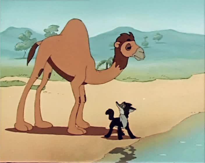 Шакалёнок и верблюд