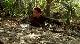 Земля аллигаторов - Ragin Cajun Redneck Gators