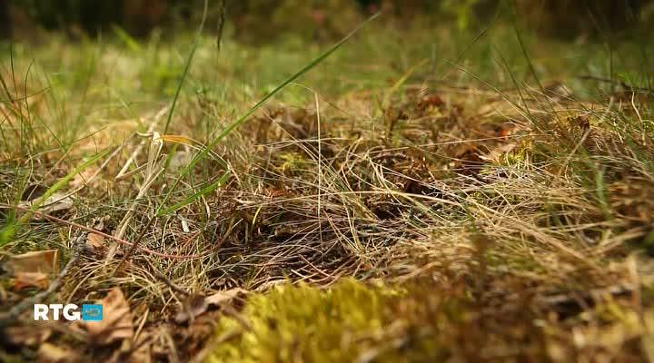 Природа Валаамского архипелага. Весна