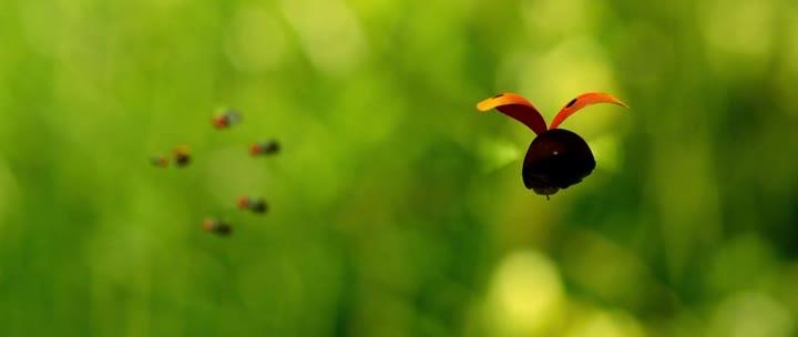 Букашки. Приключение в Долине муравьев - Minuscule - La vallГ©e des fourmis perdues