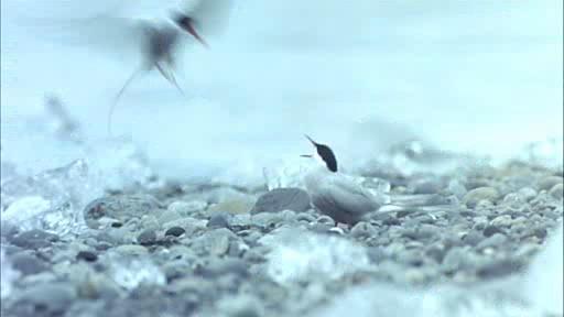 Птицы - Peuple migrateur, Le