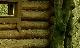 Скорпион на ладони