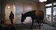 Лошадь на балконе - Das Pferd auf dem Balkon