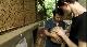 BBC: Мир природы. Ковчег сэра Аттенборо - BBC Natural World - Attenborough's Ark