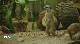 Прогулка по Ленинградскому зоопарку