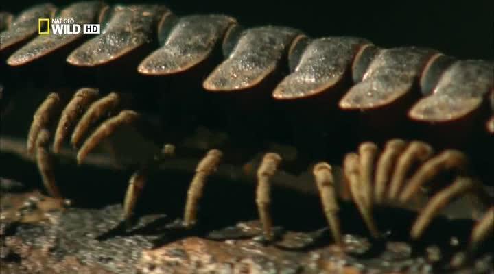 National Geographic: Коллекция живой природы. Ядовитый остров - National Geographic- Wildlife Collection. Venom Islands