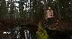 Природный парк Вепсский лес