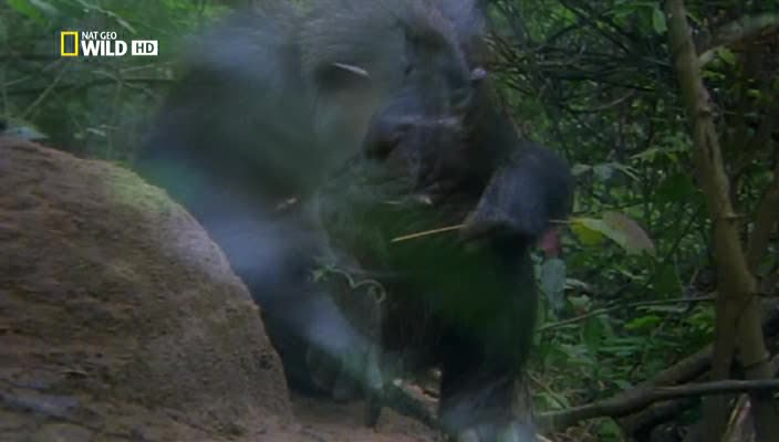 Королевство обезьян: Брат на брата - Wild Kingdom Of The Apes