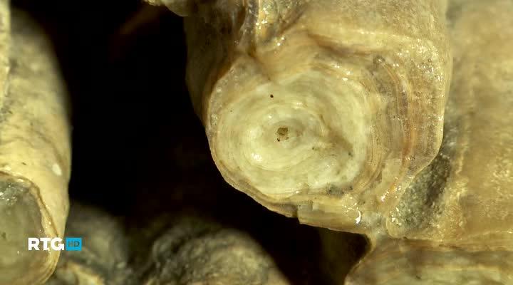 Подземный мир хребта Азиш-Тау