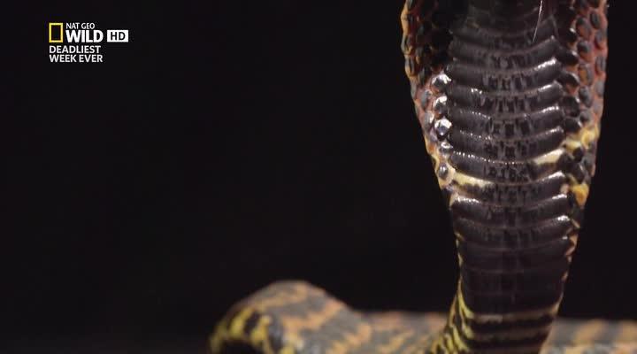 Мафия кобр - Cobra Mafia