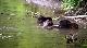 Тайная жизнь бобров - The Beaver Whisperers