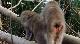 Дикие животные Японии - Japan's Wild Year