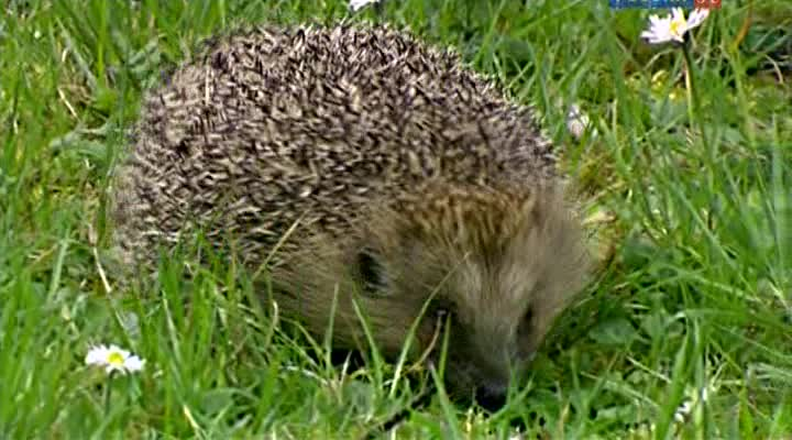 �� ����� ����� � ������ ����������� ���������� - Climate Change- A Talk with the Animals, The Hedgehog