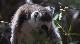 Мадагаскар. Зеленые сокровища Красного острова - Madagascar. Green Treasure of the Red island