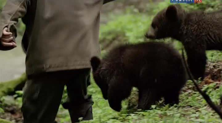 Медвежьи истории - Beary Tales
