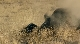 ������������ 2: ����� � ������� - The Condemned 2- Desert Prey