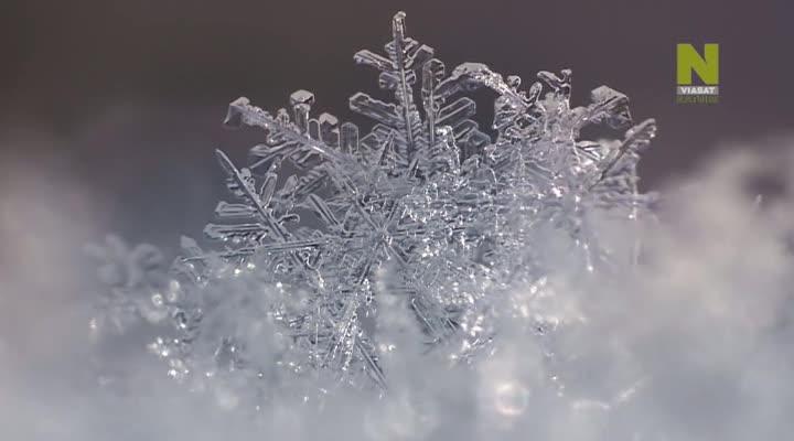 Подготовка к зимовке - Christmas Winter Wonderland