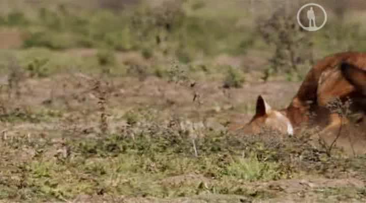 Ошибки природы - Animal Misfits