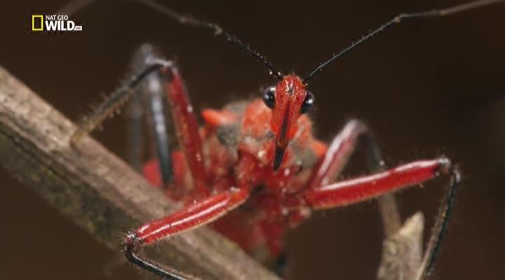 Удивительные насекомые - Incredible Insects