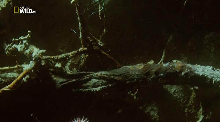 Удивительные копатели - Incredible Diggers