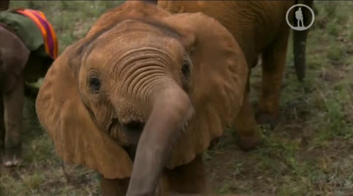 Самые милые животные - Super Cute Animals