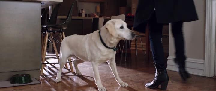 Имущество с хвостом - Who Gets the Dog