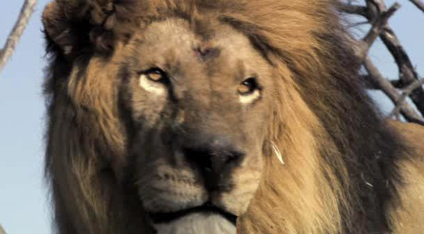 Львиная семейка - Pride