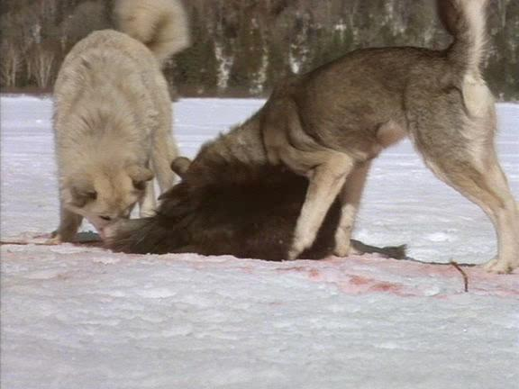 Зов предков - The Call of the Wild: Dog of the Yukon