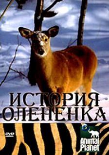 Animal Planet: История олененка - (Animal Planet: The Littlest Reindeer)