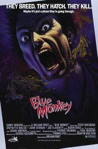 Голубая обезьяна - (Blue monkey)