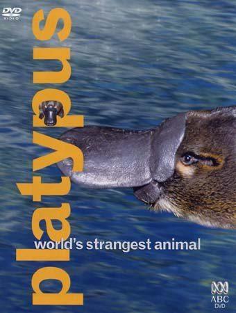 ABC: Самое необычное животное в мире. Утконос - (ABC: Platypus. World's Strangest Animal)