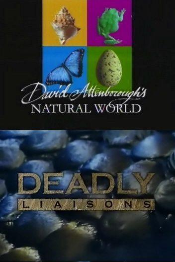 BBC: Наедине с природой: Смертельные связи - (Dladly liaisons)