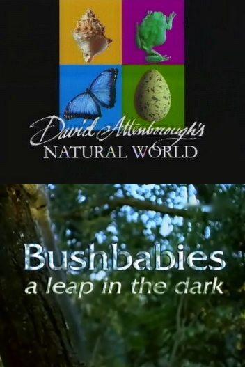 BBC: Наедине с природой: Лесные малютки-ночные прыгуны - (Bushbabies a leap in the clark)