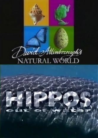 BBC: Наедине с природой: Бегемоты без воды - (BBC: HIPPOS out of water)