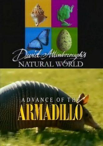 BBC: Наедине с природой: Наступление броненосца - (Advance of the ARMADILLO)