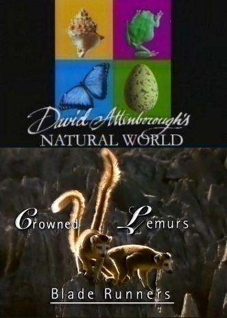 BBC: Наедине с природой: Коронованные Лемуры - (BBC: Growned Lemurs)
