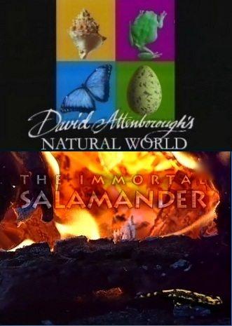 BBC: Наедине с природой: Бессмертная саламандра - (BBC: The immortal Salamander)