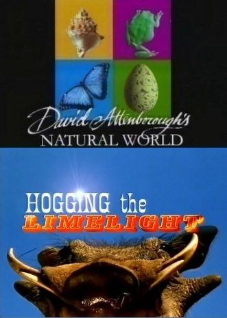 BBC: Наедине с природой: Бородавочники крупным планом - (BBC: Hogging the Limelight)
